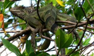 Przyroda na Karaibach